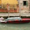 Barque Garance